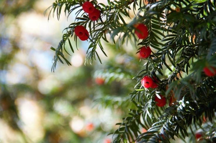 tree-2863560_960_720